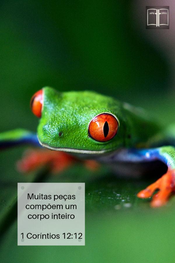Um sapo verde da floresta amazônica fica em uma folha verde.  Muitas peças compõem um corpo inteiro. 1 Coríntios 12:12