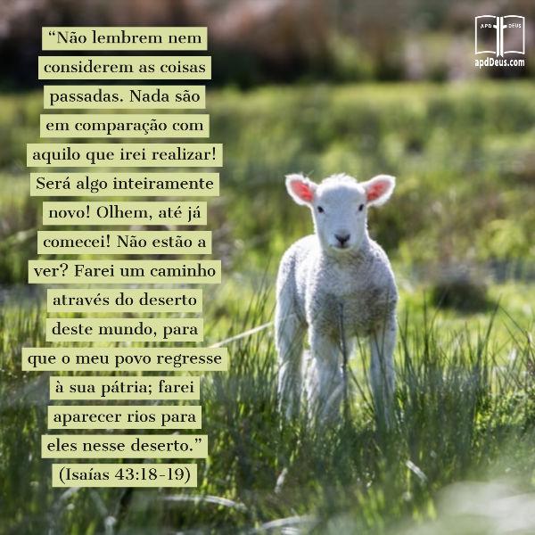 """Um cordeiro. """"Não lembrem nem considerem as coisas passadas. Nada são em comparação com aquilo que irei realizar! Será algo inteiramente novo...Farei um caminho através do deserto."""" (Isaías 43:18-19)"""