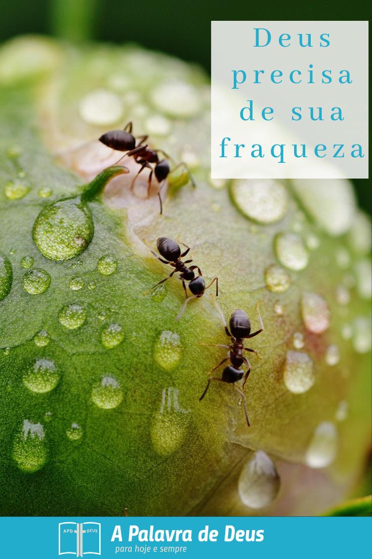 Formigas rastejando e trabalhando juntas em um peão grande, prova que, mesmo quando algo é pequeno e fraco, pode ser forte e poderoso.