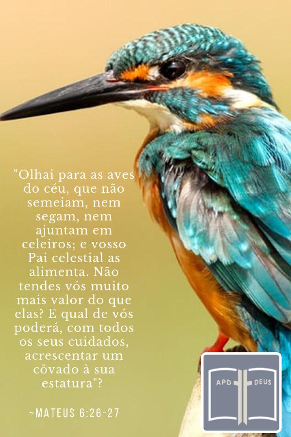 Um pássaro turquesa e laranja lembra-o: Olhai para as aves do céu, que não semeiam, nem segam, nem ajuntam em celeiros; e vosso Pai celestial as alimenta. Não tendes vós muito mais valor do que elas?