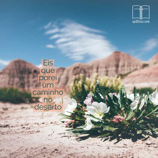 Um cacto de florescência no chão do deserto. Ele fará um caminho, mesmo no deserto.