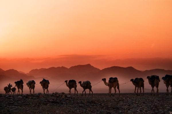 Uma caravana de camelos, caminhando pelo deserto, enquanto o sol se põe.