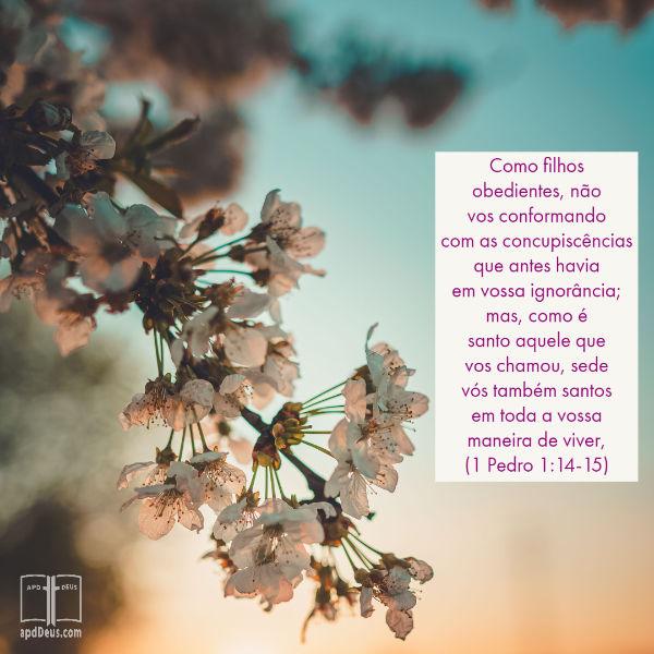 Uma cerejeira em flor de primavera com as palavras de 1 Pedro 1:14-15 escrito.